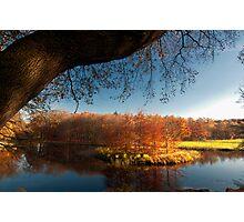 Autumn 14nov12 Photographic Print