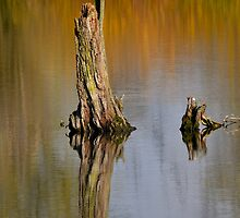 Trunk reflection by Nicole W.