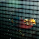 Bird, Sleeplessness and a Cage by Bjarte Edvardsen