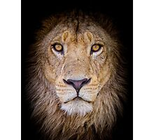 African Male Lion Portrait Photographic Print