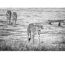 African Cheetah Photographic Print