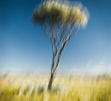 Way out West - A Collection of Images from Australia's Interior  by Liam Byrne