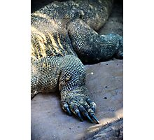 Scale and Claw Photographic Print