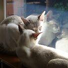 Morning nap by simonescott