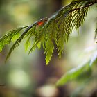 Pine Branch by Yannik Hay