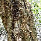Tree Stories by Sherry Sagle