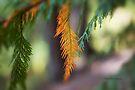 Orange Pine Branch by Yannik Hay