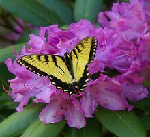 Butterfly on Laurel iPad Case by Annlynn Ward