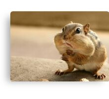 """Who me?  I didn't take the peanuts!"" Canvas Print"