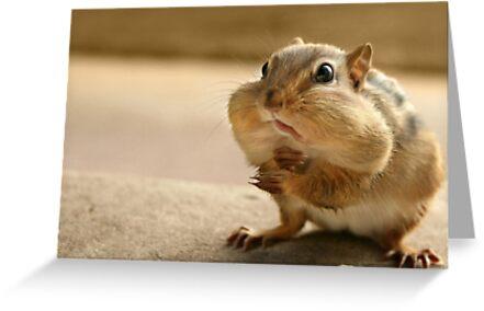 """Who me?  I didn't take the peanuts!"" by Lori Deiter"