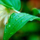 Dew Drops by vernonite