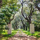 Oak Tree Lined Southern Drive by Jonicool
