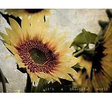 Beautiful World Photographic Print