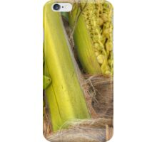 Coconut Tree | iPhone/iPod Case iPhone Case/Skin