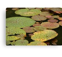 Water Lillies, Brazil Canvas Print