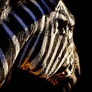 A horse in striped pajamas by vigor