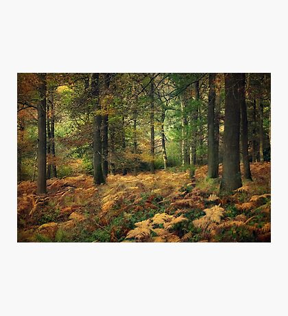 Autumn Woods Photographic Print