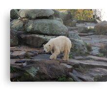 Big Bear Paws Metal Print