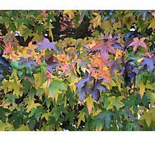 Multi Coloured Leaves Of Autumn Photographic Print