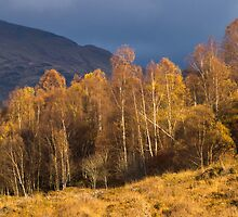 Light in Glen Lyon, Perthshire, Scotland by Cliff Williams