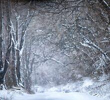 Winter Trees by KellyHeaton