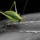 Bush Cricket by SteveHphotos