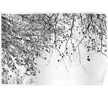 Autumn Tree in Black and White Poster