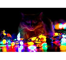 Twinkle Kitty Photographic Print
