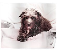 Bailey- The Patterdale Poster