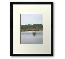 BEAR CREEK CYPRESS ON A GLOOMY DAY Framed Print