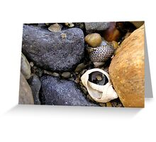 Rocks and Shells Greeting Card