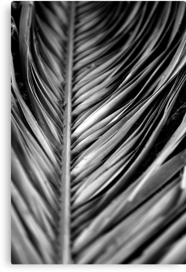 Silver Leaf by A. Duncan