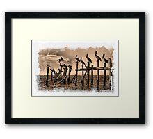 Pelican Roost Framed Print