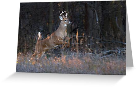 Buck Jump by Jim Cumming