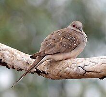 Diamond Dove by Robert Elliott