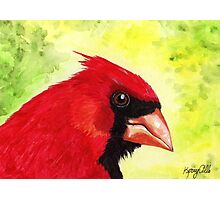 Red Cardinal Portrait Photographic Print