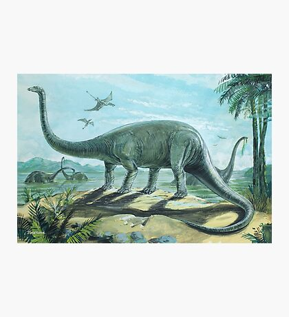 Diplodocus Photographic Print