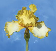 Yellow Iris by Robin  Szala