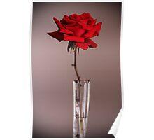 Red Rose Vase Poster