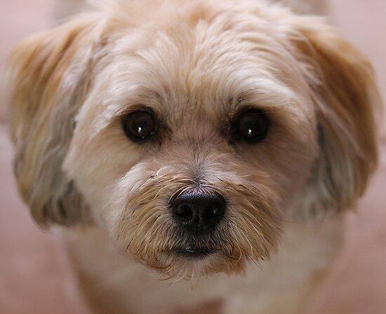 Puppy Eyes by Stephanie Jensen