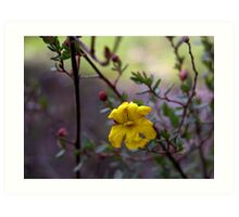 cute little yellow flower Art Print