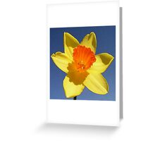 Yellow and Orange Colored Daffodil Close Up Greeting Card
