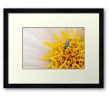 Pollen Lunch Framed Print