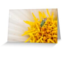 Pollen Lunch Greeting Card