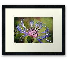 Azure Star Framed Print