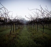 The Last Grapes of Summer by Kortney Thoma