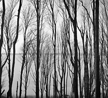 Discovery Park Treescape by Mitchel Whitehead