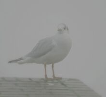 Sea Gull In Mist by patjila