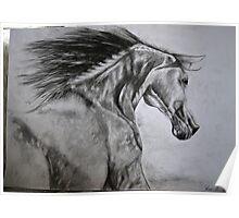 Horse running Poster