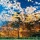 Autumn leaves fall by THHoang